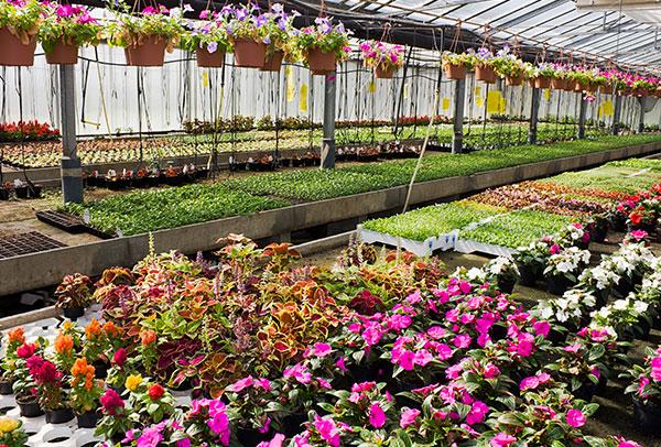 Veredeling van bloemen en planten
