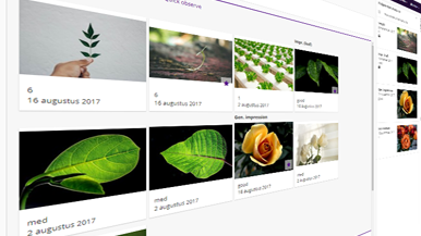 compare plant breeding images