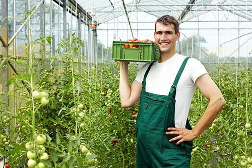 Veredelaars software in het veld groente veredeling